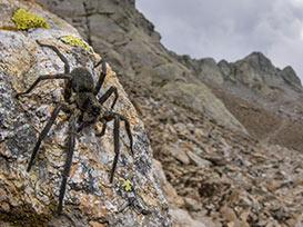 Clima e organismi: dal fondo delle grotte alla cima delle montagne